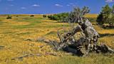 Tree on the Plains
