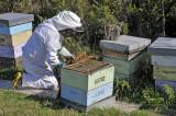 2 April 2011 - Beekeeper at work