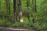 woodlands near Lelystad