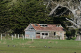 The old shed revisited - Makara