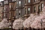 Spring Magnolias in Back Bay III - MS