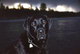 May 16, 1998 --- Red Deer River, Alberta