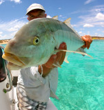 Ningaloo Reef, Western Australia --- Video