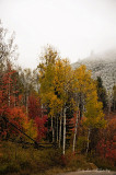 Quest for Fall Color