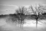 MISTY MORNING-2953.jpg