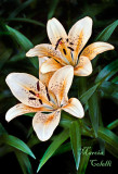 ASIATIC LILY_0479.jpg