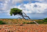 DIVI DIVI-TREE 0678.jpg
