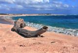 BABY BEACH, ARUBA-0640.jpg