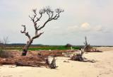 FOLLY BEACH-2403.jpg