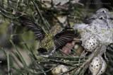 new behaviour at the nest