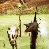 2011-07-30 The swamp