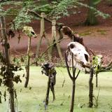 Sagnlandet - The swamp
