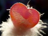 Heart and feathers