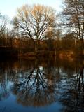 2008-01-27 Tree reflection