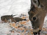Olympus SP-560 ~WV Whitetail Deer ~  Jan 2008