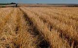 Harvested Wheat Field  (SE_WA_082812_0121-15.jpg)
