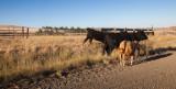 Representative Cows  (SE_WA_083012_0804.jpg)