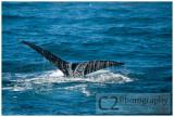 Whale Watching at Morro Bay, California