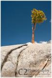 544-Trees grow from rocks in Yosemite_DSC7822.jpg