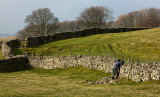 Yorkshire Dales near Hawes IMG_9504.jpg