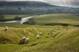 Yorkshire Dales near Hawes  IMG_9301.jpg