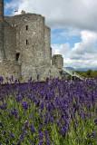 Harlech Castle IMG_1575.jpg