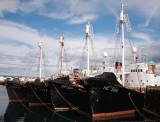 IDLE FISHING BOATS ?.