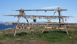 Drying Fish on Flatey