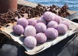 Urchins.