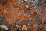 Colourful Lichens.