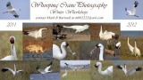 Whooping Crane Photography Tours: Winter 2011-12 Workshops