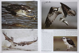 2012 Books with my photographs - The Illustrated Birds of Texas