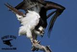 Osprey: Comfort movements - adult - full body stretch