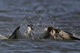 Osprey - In water shake