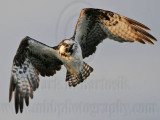 Osprey - Aerial Shake