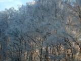 Frozen German forest