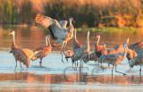 general_cranes