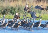 Flying Cranes (best viewed as slide show)