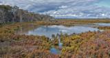 Creery Wetlands