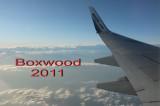 boxwood_2011