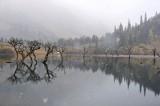Snowy Reflections 飄雪