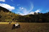 Jiulong Nature Reserve 九龍自然保護區