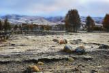 Snowy Fields 雪域