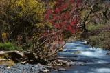 Colorful Stream en route 溪流