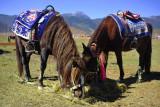 Horse Rides 駿馬