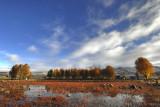 Red Grassland, Sangdui 桑堆紅草地