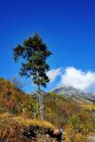 Lonely Tree 孤樹