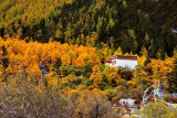 Chonggu Monastery, Yading 沖古寺
