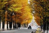 Autumnal Roads 秋之公路