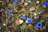 Wild Flora 山花